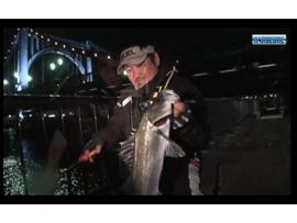 DUEL東京湾シーバス釣行動画