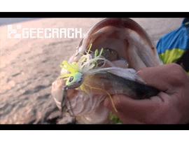 スイングチャター釣行動画