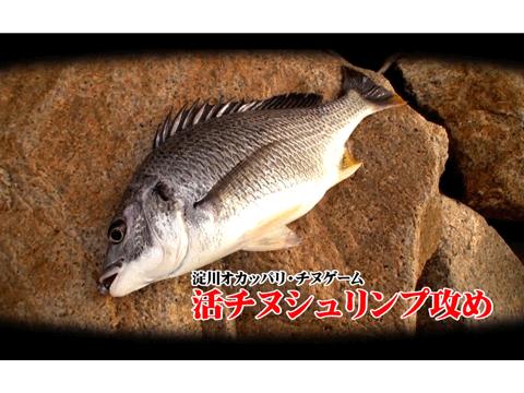 【動画】 エコギア「活チヌシュリンプ」で狙う淀川チヌゲーム