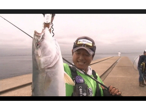 神戸沖堤でブリをキャッチ!――massimoTV Vol.43