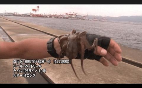 神戸沖堤でブリをキャッチ!――massimoTV Vol.43_002