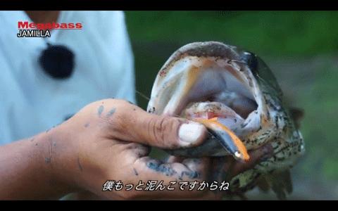 ジャミラなどメガバスルアーで楽しむ野池オカッパリ!(動画)