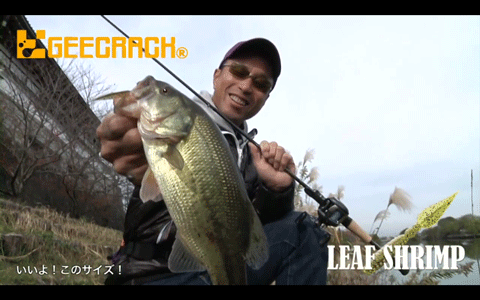 ジークラック「リーフシュリンプ」で晩秋の大江・五三川のバスに挑む(動画)