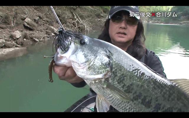 ヘラクレスLTS&ジグでバス連発!菊元俊文が実釣インプレ!(動画)