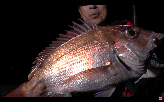 ショアマダイの釣り方、ルアーの使い分けを実釣解説!(動画)
