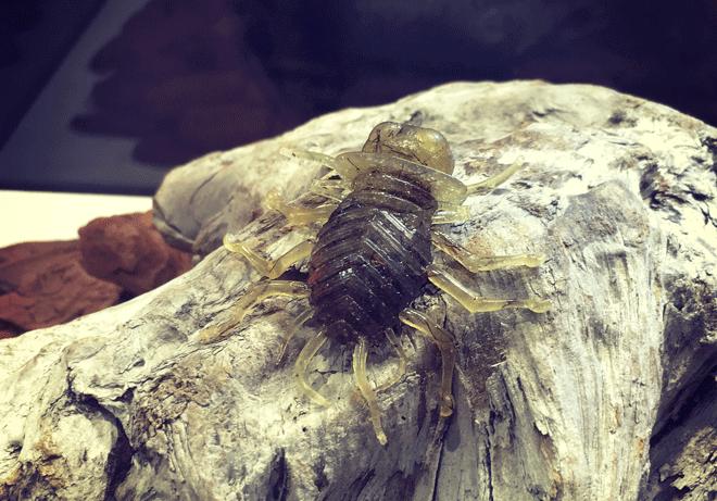忍虫(ニンムシ)はアイバムシを超えるか!?DUOレアリス発の虫ルアー